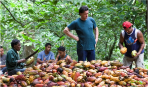 Willie Harcourt Cooze and farmers at El Tesoro with cacao pods
