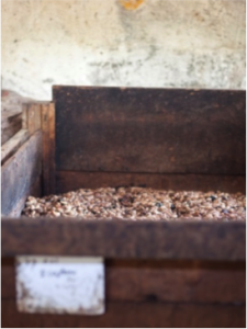 cacao beans fermentation box