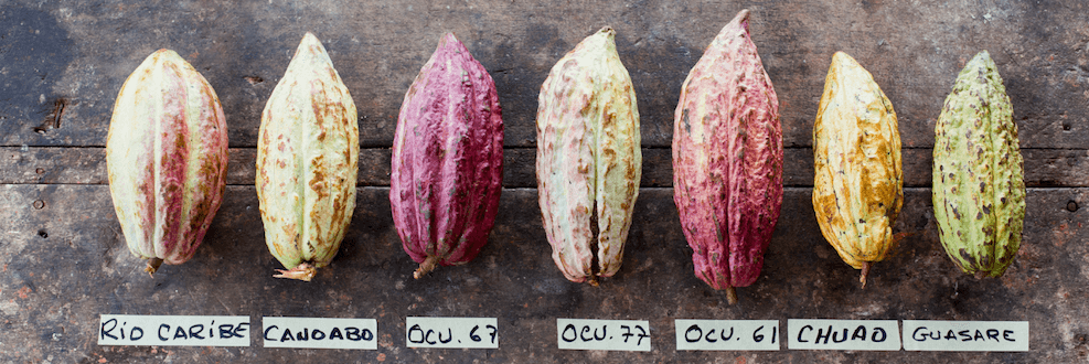 different cacao varieties
