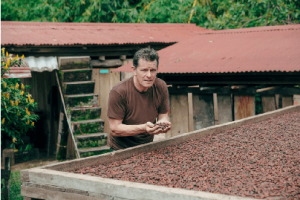 Willie Harcourt Cooze looking at cacao beans , single estate cacao Los Llanos