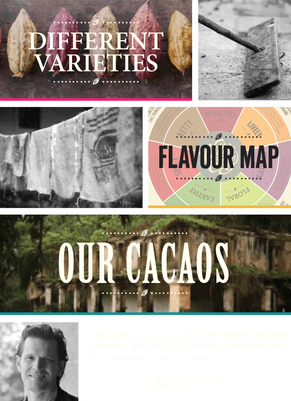 cacaos varieties, bean to bar chocolate, single estate chocolate flavour map
