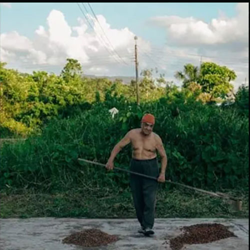 Turning cacao beans on a drying patio in Colombia. Willie's Cacao chocolate is made bean to bar